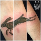 TODAY'S WORK BY KY - HARE ON FOREARM